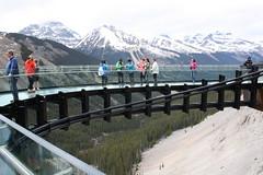 Glacier Skywalk Over Sunwapta Valley (CAYphotos) Tags: albertacanada jaspernationalpark canadianrockies sunwaptavalley glacierskywalk