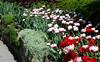 Brooklyn Botanic Garden (john weiss) Tags: camera nyc flowers newyork brooklyn garden geotagged unitedstates earth places human botanicgarden geo fragrancegarden ebbetsfieldhouses galaxys5 gpsnames geo:lat=4066848337 geo:lon=7396238297