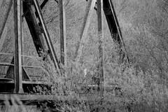Railroad Bridge (Minolta 505si, AgfaPhoto APX 100) (baumbaTz) Tags: railroad bridge blackandwhite bw slr film monochrome analog germany deutschland iso100 blackwhite minolta atl bridges ishootfilm 150 m42 scanned apx100 april epson sw analogue dynax monochrom grayscale pentacon agfa rodinal schwarzweiss brücke apx analogphotography 505 2200 greyscale brücken 2014 oste 200mm niedersachsen lowersaxony filmphotography jobo fpp ilovefilm v500 505si adox adonal filmisnotdead autolab vuescan analoguephotography agfaphoto bremervörde minoltadynax505sisuper istillshootfilm bremervoerde filmforever pentacon200mm epsonv500 agfaphotoapx100 adoxadonal filmphotographyproject adofix believeinfilm blackandwhiteology joboautolabatl2200 20140419