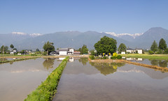 Rice fields, cemetery & Japanese Alps (maxunterwegs) Tags: friedhof mountain reflection cemetery japan cementerio  japo cemitrio ricefield nagano japon ricepaddy reisfeld paddyfield cimetire japn japanesealps arrozal rizire  alpesjaponeses alpesjaponaises nihonarupusu japanischealpen kitaazumidistrict