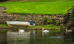 Swans on the Tay at Perth (Bill M9) Tags: green water wall river boat steps perthshire tay swans perth fz150