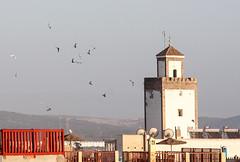 Minaret aux mouettes (jfgornet) Tags: minaret medina toits mouettes mg8599 marocessaouira