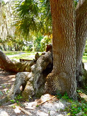 Stragulation (Omi<3) Tags: woman tree being like creepy trunk looks strangled