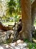 Stragulation (Omi<3) Tags: woman tree being like creepy trunk looks strangled