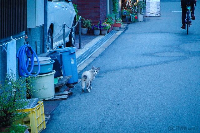 Today's Cat@2014-07-15