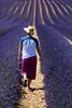 Walking... (fotopierino) Tags: france walking provence viola francia 70200 provenza lavanda campi profumo purle valensole fotopierino