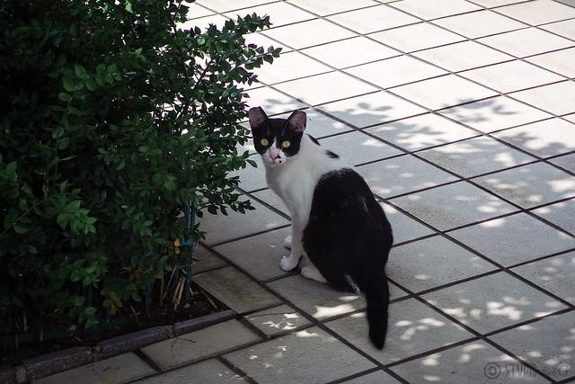Today's Cat@2014-07-21
