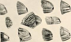 Anglų lietuvių žodynas. Žodis sea-acorn reiškia jūra-acorn lietuviškai.
