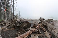Overland Trails marker (daveynin) Tags: fog coast cloudy nps spot driftwood marker coastline olympic deaftalent deafoutsidetalent deafoutdoortalent