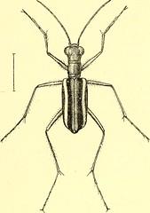 Anglų lietuvių žodynas. Žodis mysore thorn reiškia Mysore tornas lietuviškai.