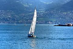 Balade  la voile (Diegojack) Tags: eau lac lman paysages haut voiliers