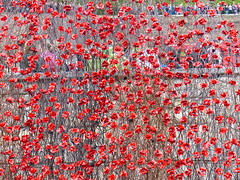 Blood Swept Lands and Seas of Red (Gilder Kate) Tags: london ceramic redsea poppy poppies ww1 remembrance moat firstworldwar toweroflondon artinstallation towerhill commemoration centenary seaofred inremembrance tompiper historicroyalpalaces paulcummins panasoniclumixdmcfz200 towerpoppies bloodsweptlandsandseasofred firstworldwarremembered