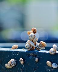 Believe U can touch the sky ((Virginie Le Carré)) Tags: climb bokeh dream snail pile reve grimper amas escragot