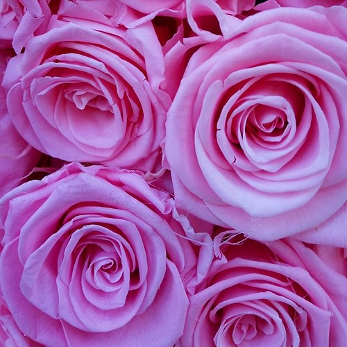 #rose #roma #romance #piazza di #spagna #photostreet #like4like #follows #manfrys #like #fiori #flower #pink