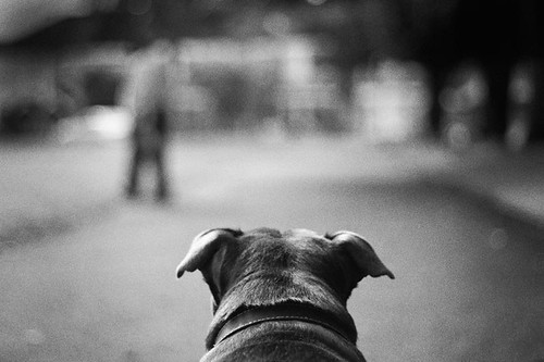 To see the world through the eyes of a dog