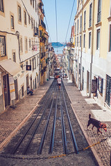 The dog (tropeone) Tags: summer urban portugal europe lisboa lisbon hill tram downhill fujifilm alto bairro x100s