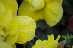 Sun Drops (Clif Budden) Tags: nature leaves september alive 2014 bowringpark