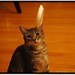 "Frizkee, New Cat Sport • <a style=""font-size:0.8em;"" href=""http://www.flickr.com/photos/63729613@N05/14965644318/"" target=""_blank"">View on Flickr</a>"