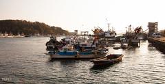 5D21113-1035.jpg (highluxphoto) Tags: travel newzealand port fishing asia wharf southkorea day10 mokpo highluxphoto