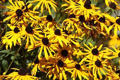Pretty Flowers (DragonSpeed) Tags: park flowers canada canon bc britishcolumbia burnaby burnabylake 100400 burnabylakeregionalpark canon7d