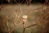 My first try photographing Danboard (2). (Alexander Máni Kárason) Tags: trees naturaleza nature canon toy outside photography eos photo interesting árboles imac bokeh small natur mini hobby climbing arbres öskjuhlíð manfrotto lowepro 2014 danbo amazoncojp boxman interessant oskjuhlid intéressant revoltech interestante danboard 5dmarkiii alexandermani