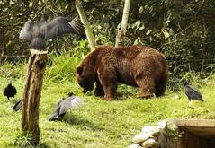 Image54 (Daniel.N.Jr) Tags: animal selvagem zoologico kodakz990
