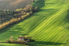 Verde (Massimo Feliziani) Tags: italy verde green landscape casa italian italia erba campo marche paesaggio colline italiano grano macerata cascina ascolipiceno fermo rurale marchigiano marchigiane coltivato