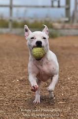 sigw7 (Foxy Robyn) Tags: uk rescue dog islay pound rescuedog robynlewisphotography rlpetphoto wwwrlpetphotocouk