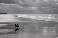Norfolk (donvucl) Tags: sky bw dog clouds reflections nikon greys norfolkbeach d7000 donvucl