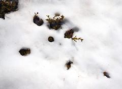 Spring time in the mountains (phunnyfotos) Tags: snow spring nikon melting australia victoria vic meltingsnow alpinenationalpark northeastvictoria bogonghighplains d5100 nikond5100 phunnyfotos