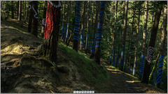 Bosque de Oma 2 (360 interactiva) (Juan Ig. Llana) Tags: panorama 360 bosque panoramica oma epic bizkaia agustin ibarrola spherical bosquepintado gigapan esferica epicpro