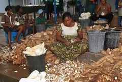 Women peeling cassava roots at IITA-Ibadan (IITA Image Library) Tags: peeling cassava manihotesculenta iitaibadan cassavaprocessing