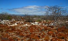 Galapagos View (Mahmoud R Maheri) Tags: landscape galapagos seymourisland galapagosislands pacificocean naturereserve birdsanctury bush wildbush ecuador sky clouds