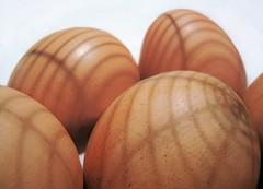egg (guzmania*) Tags: macromondays hmm macro theme egg huevo moreno cáscara sombras brownegg shell eggshell shadows