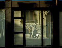 La vida invertida :: The inverted life  :: La vie inversée ::: 20170101 5424 (Oiluj Samall Zeid) Tags: león españa fray dálmata reflejo reflection dalmatian réflexion dalmatien spain espagne littledoglaughedstories littledoglaughednoiret