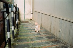 cat in Savoca (Mau81) Tags: kodak ricoh 500g analog vintage sicily taormina catania acicastello savoca godfather vendicari nofilters