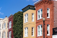 Georgetown Row Houses at 34th & M Streets (dckellyphoto) Tags: rowhouse rowhouses georgetown washingtondc districtofcolumbia colors color colorful house architecture urban city brick paint painted ivy green 2017 dc washington homes old 34street mstreet sky clearsky lamppost windows repetition