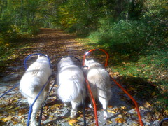 "Czar, Princess, and Hudson MUSHing on a Beautiful Fall Day • <a style=""font-size:0.8em;"" href=""http://www.flickr.com/photos/96196263@N07/14367692330/"" target=""_blank"">View on Flickr</a>"
