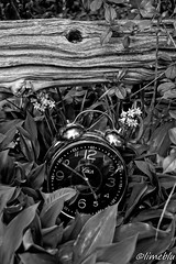 Clock1 (limebluphotography) Tags: barcelona china california birthday christmas wood old city family flowers blue autumn england blackandwhite bw food dog baby chicago canada black flower color berlin bird art fall clock film beach church car fashion birds animals bike festival architecture clouds bells cat canon naked de dance football concert nikon asia europe day hand time florida band australia abs