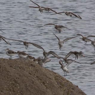 waders landing