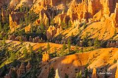 Hoodoos bathing in the sun (Kunal Mehra photography) Tags: brycecanyon brycecanyonnationalpark rainbowpoint utahnationalpark brycecanyonhoodoos utahclouds kunalmehra brycecanyonamphitheater brycecanyonsunrise utahhoodoos utahcliffs faaexport brycecanyonclouds amphitheaterhoodoos amphitheatersunrise