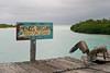 Peces Saludables (Sergio Tohtli) Tags: ocean bird trash mar tulum aves basura laguna impactoambiental residuos pelícano tulúm environmentalimpact sianka´an