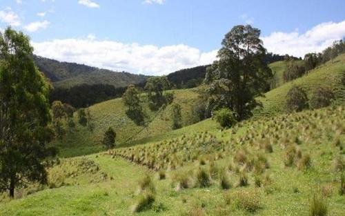 36 Timbarra Road, Bryans Gap NSW