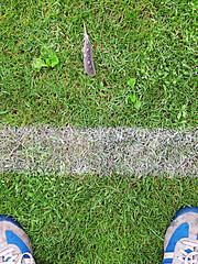 Pitch (stordito) Tags: italy verde green drops shoes milano feather pioggia scarpe gocce piuma enotria