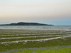 July 1st 2014 (Mel Byrne) Tags: ireland sea summer chimney portrait sky dublin dog sun lighthouse white bl