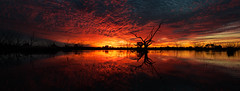 Campbell's Swamp (Jeff 05) Tags: sunset red sky panorama reflection water clouds photoshop swamp ononesoftware 1424mm28 campbellsswamp nikond300s perfecteffects8 lakewyangannswaustralia
