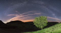 'Sleepy Valley' - Cwm Hirnant, Bala (Kristofer Williams) Tags: sky panorama tree wales night stars landscape nightscape clear valley lonetree bala milkyway cwmhirnant