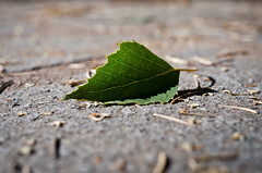 July 24, 2014 (THE ZEN DIARY  David Gabriel Fischer) Tags: david green gabriel photography photo leaf diary journal buddhism ground minimal falling zen meditation fischer zazen