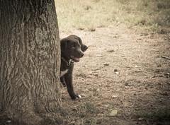 La vera amicizia non ha confini (XXAquarius) Tags: park parco eos friend friendship amici amicizia giochi gioco cani cuccioli