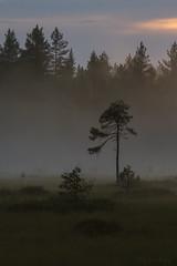 Dimma på myren (Per_72a) Tags: sunset mist nature fog forest landscape evening sweden skog sverige fen mire norrland solnedgång myr dimma kväll